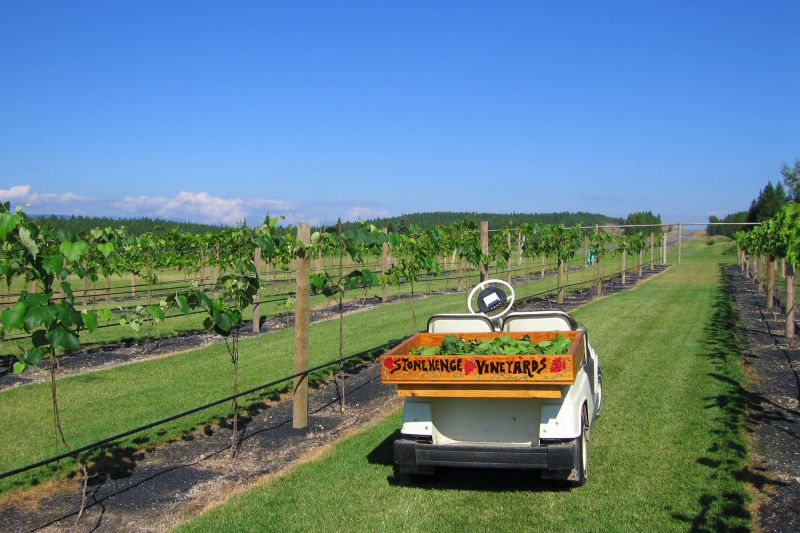 vineyard-cart-2