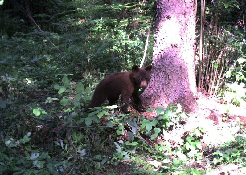 crop-bear